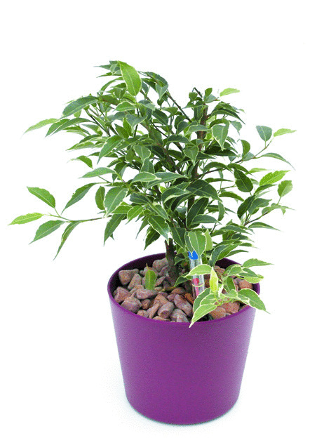Gef e mit hydro profi line pflanzsystemen einfach genial for Hydrokulturpflanzen shop